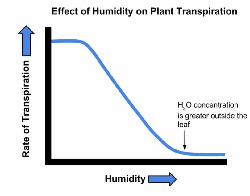 Effect of humidity on plant transpiration