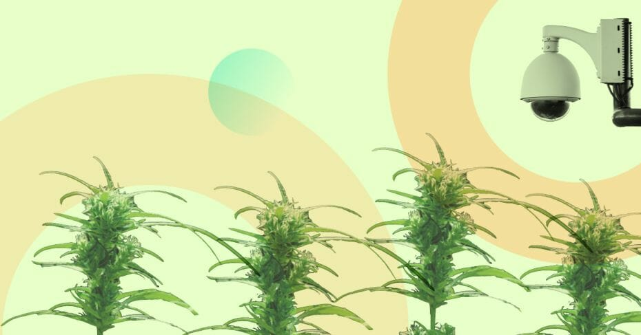 GrowerIQ Cannabis Consulting: Standard Cultivation License