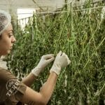 The Ultimate Guide to SOPs for the Cannabis Industry: Part II