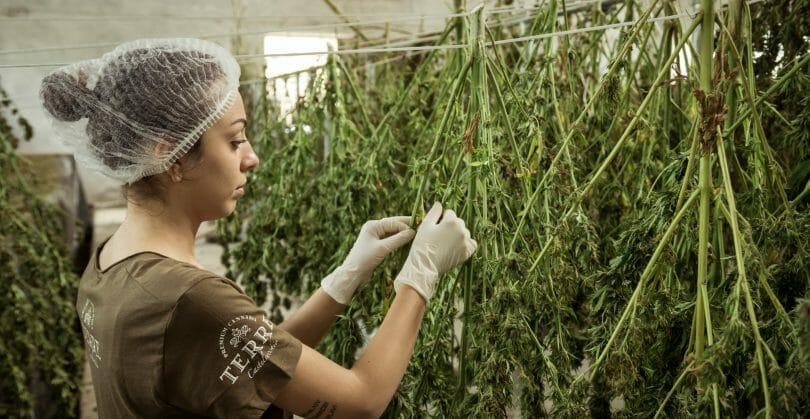 GrowerIQ's cannabis consultants can write custom SOPs for your facility in areas from Cultivation & Production, all the way through to Sanitation. Get started today.